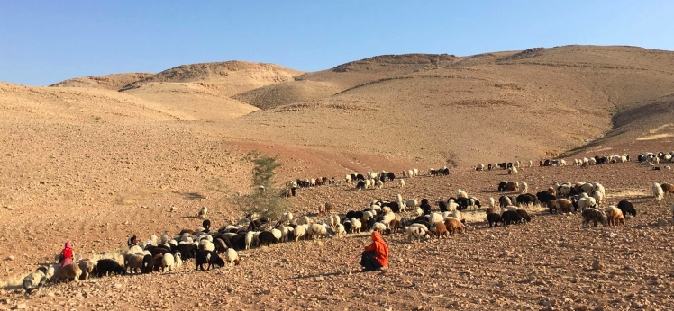 bedouin shepherds jordan trail