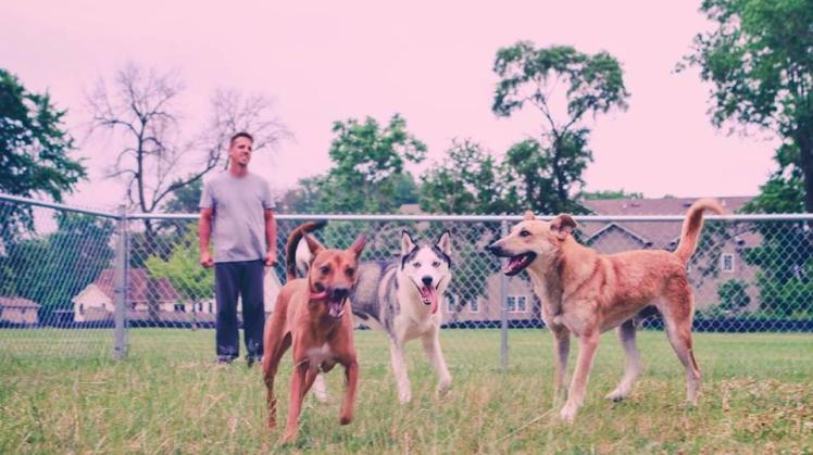 adopt dogs of jordan