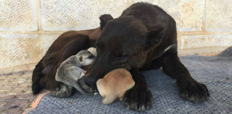 malath canaan rescue jordan mom and pups