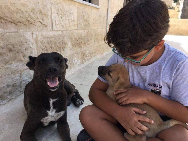 mama dog adopt amman