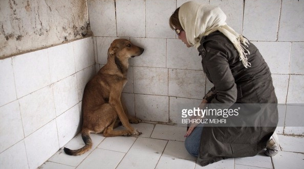 dog and muslim woman