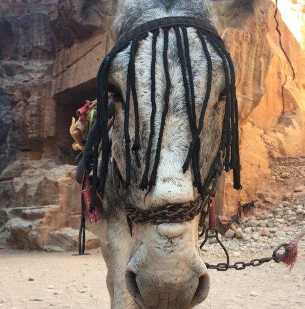 donkey cruelty petra 2