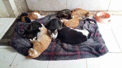 al rabee aqaba cat rescue 2