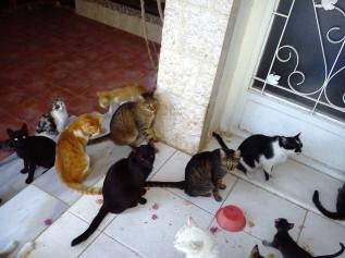 al rabee aqaba cat rescue