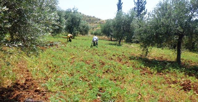 organic farm ajloun jordan