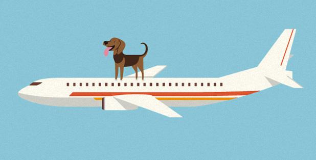 pet travel to jordan