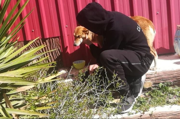 bishop student animal shelter amman