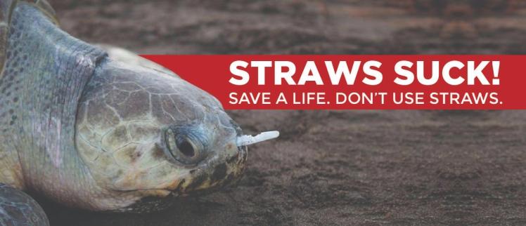 straws suck turtle